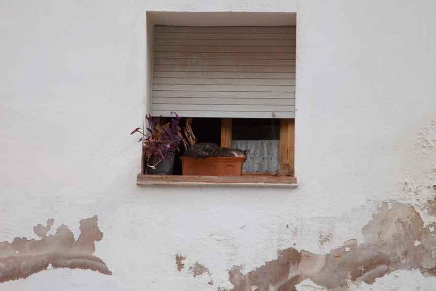 Alhambra śpiący kot