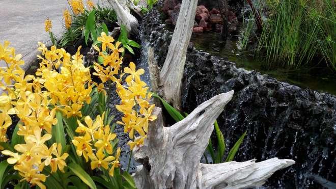 Ogód Orchidei Przykład klombu (Singapur)