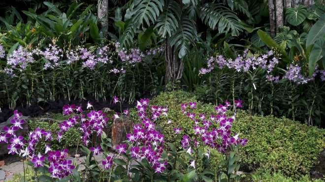 Orchidee, w otoczeniu roślin, które są u nas doniczkowymi