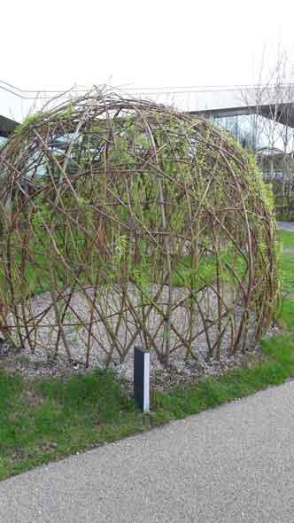 Żywa altana w ogrodzie ekologicznym (Galeria Północna)